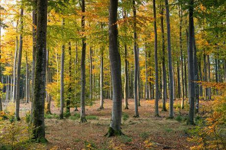 Baumstaemme-Wald-POSCH-Leibnitz-Image-pexels-johannes-plenio-1567058